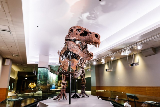 ETC illumina Sue, il T. Rex del Museo di Chicago